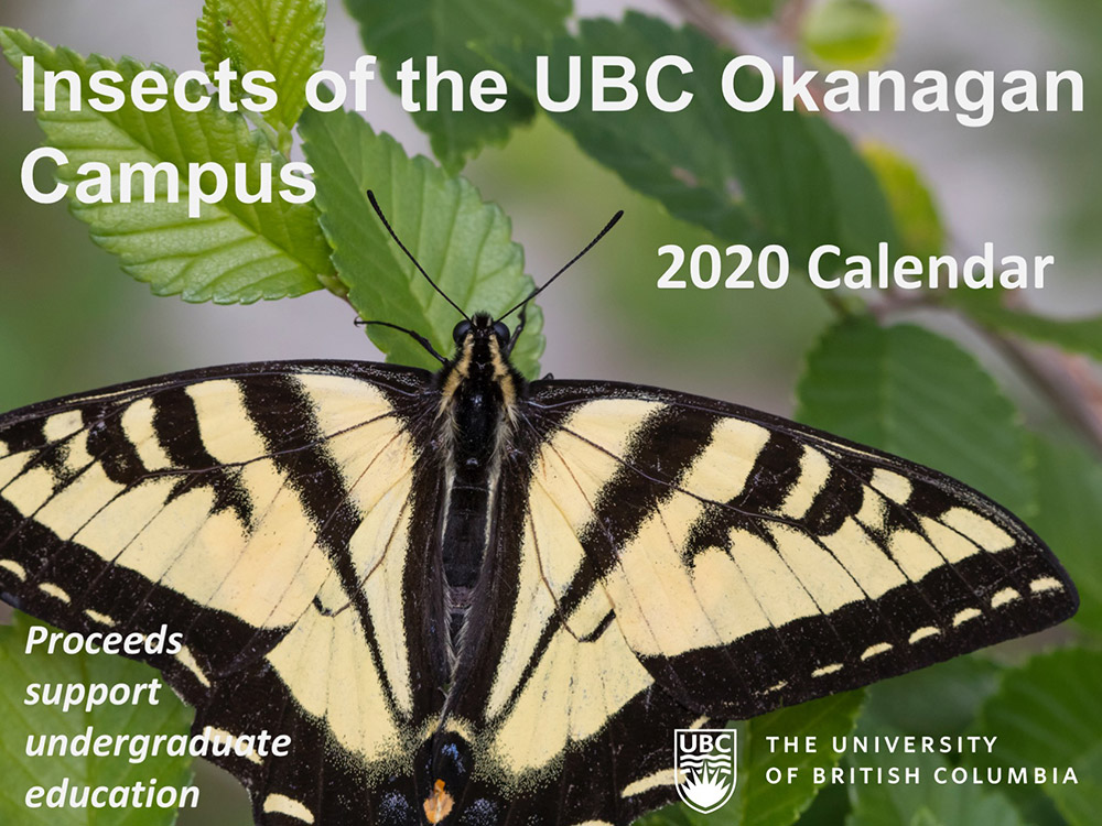 Birds of the UBC Okanagan Campus Cover
